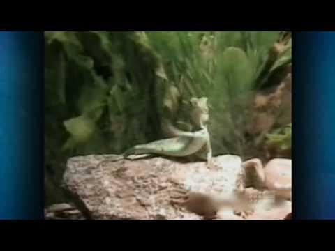 Australia's Funniest Home Videos Part 4 (2010 05 22)