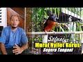 Murai Batu Nyilet Kurus Segera Atasi Dan Penanganan Sesuai Kondisi Burung  Mp3 - Mp4 Download