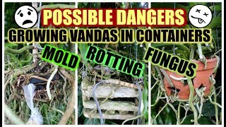 Rescuing My Vandas From Containers