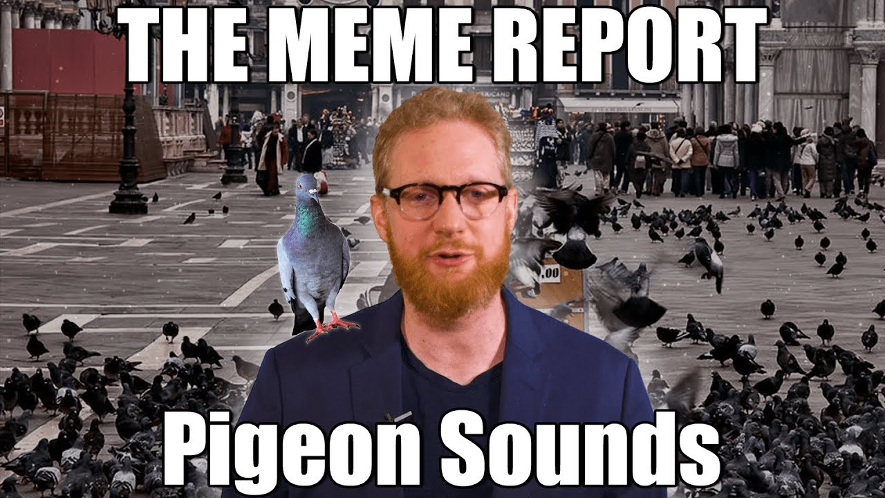 maxresdefault the meme report ep 6 pigeon sounds youtube
