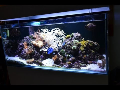 My 90 Gallon 4 foot reef tank (sump under house)