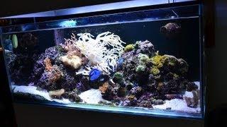 My 90 Gallon 4 Foot Reef Tank (sump Under House)