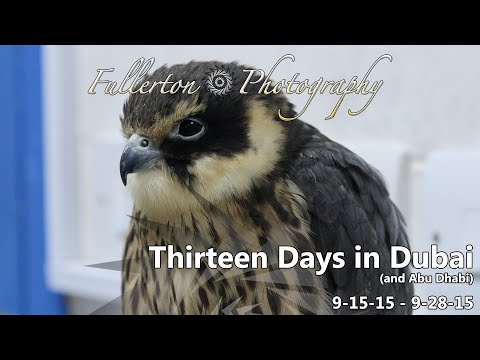 Dubai 2015 Vacation Day 2 - Abu Dhabi Falcon Hospital Tour