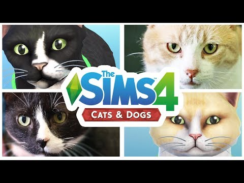 Please adopt my sims cats? | (With RSPCA)