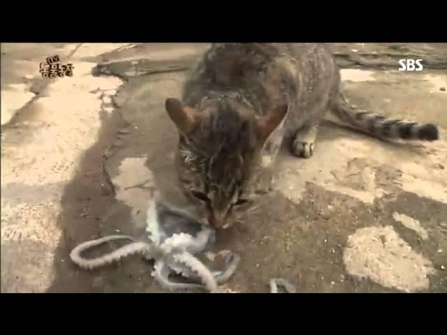 고양이 낙지절도단!?