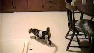 Coupon Cat!- Pettube