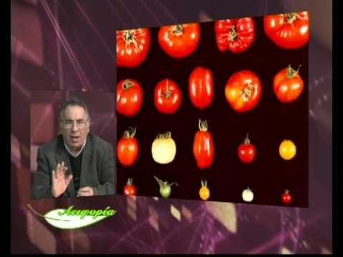 """""""Αειφορία""""-Καλλιέργεια τομάτας- 1"""