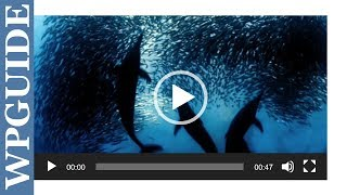 How to Embed a MP4 Video in WordPress