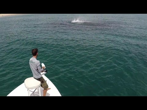 World Class Trophy Fishing - Epic Action