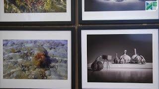 Открылась выставка  «Крупным планом» фотоклуба «Пушкино»