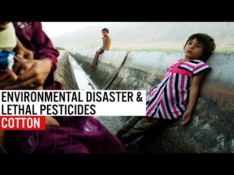 Cotton - Environmental Disaster & Lethal Pesticides