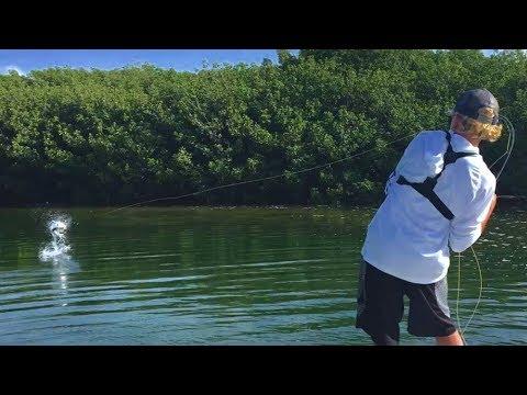 Tarpon Fly Fishing In Islamorada, Florida Keys