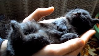 Black Kitten Has Bad Dreams