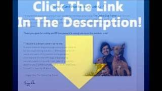 Dog Web - Discover The Powerful Dog Training Secrets - Dog Online - 2017