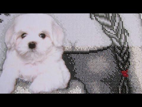 Вышивка бисером собак