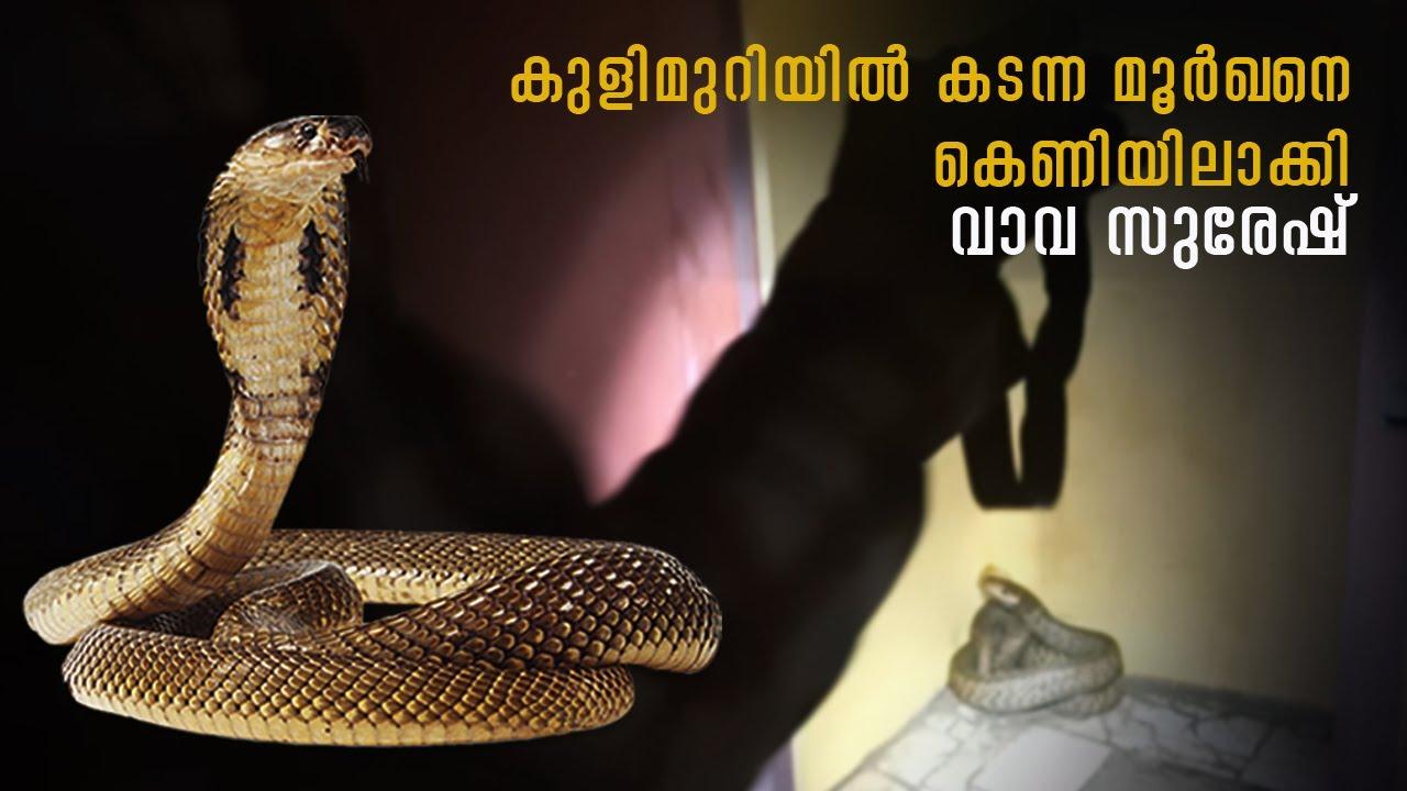 Cobra caught from bathroom   കുളുമുറിയിൽ നിന്ന് പിടിച്ച മൂർഖൻ