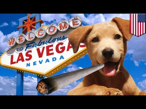 Pot for pets: Nevada bill would make medicinal marijuana available for animals