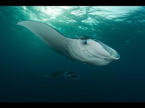 Diving Palau 2015 HD - Sharks, Manta Rays, Jelly Fish Lake & more
