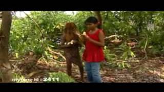 dhivehi movie film tarzan 3