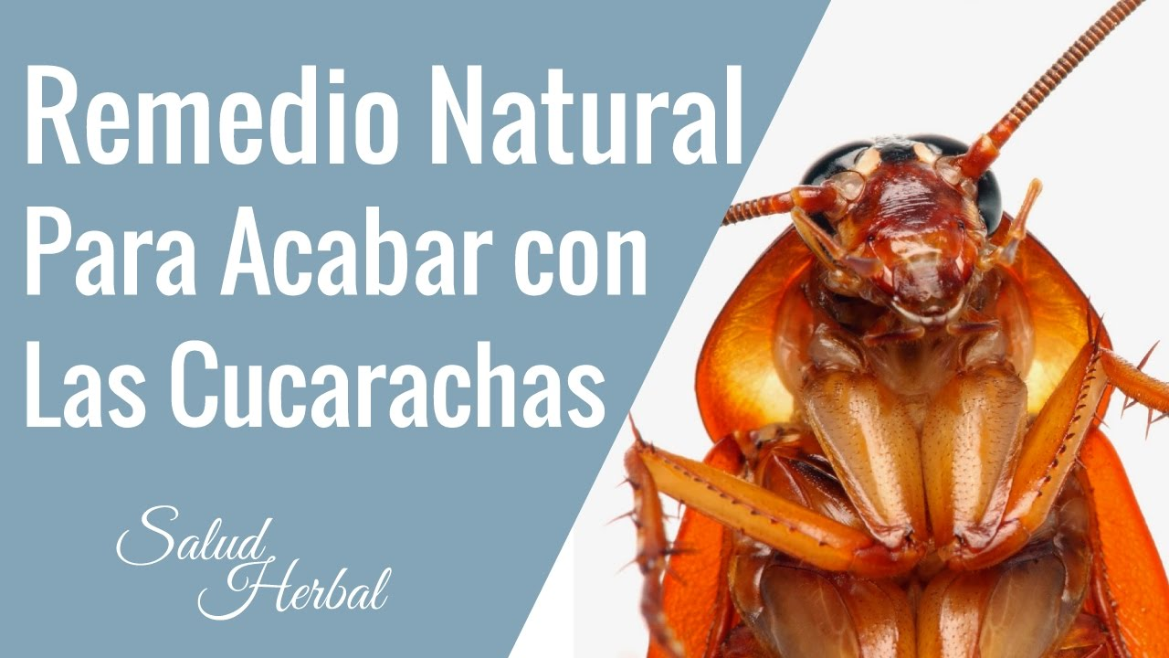Remedios caseros para acabar con las cucarachas en casa - Acabar con la carcoma ...