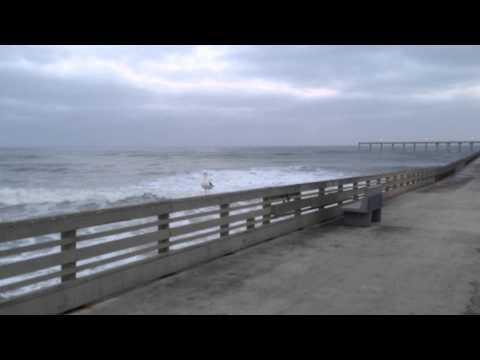 Seagulls on Ocean Beach Pier April 2014