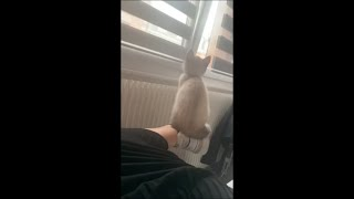Cat Getting Comfy and Balancing Herself on Owner Foot by the Window