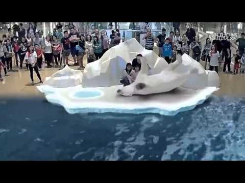 New technology, experience 3D holographic as to play with real Polar bear!