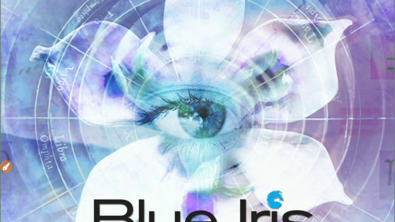 A Blue Iris Walk Through