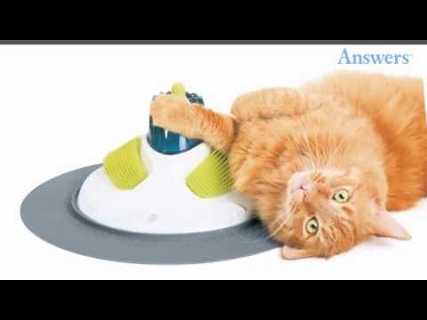 Clever Cat Products Every Owner Must Have