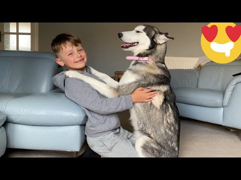 My Kids & Husky Puppy Have Become The Most Unlikely Best Friends! [KADE PROTECTS PARKER!!]