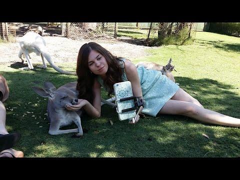 кенгуру знакомства