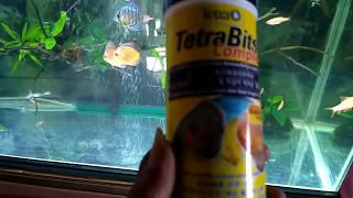 Tips agar ikan discus mau makan tetrabits