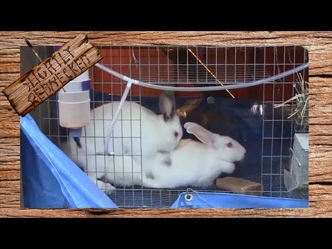 How to Breed Rabbits In a Cage System