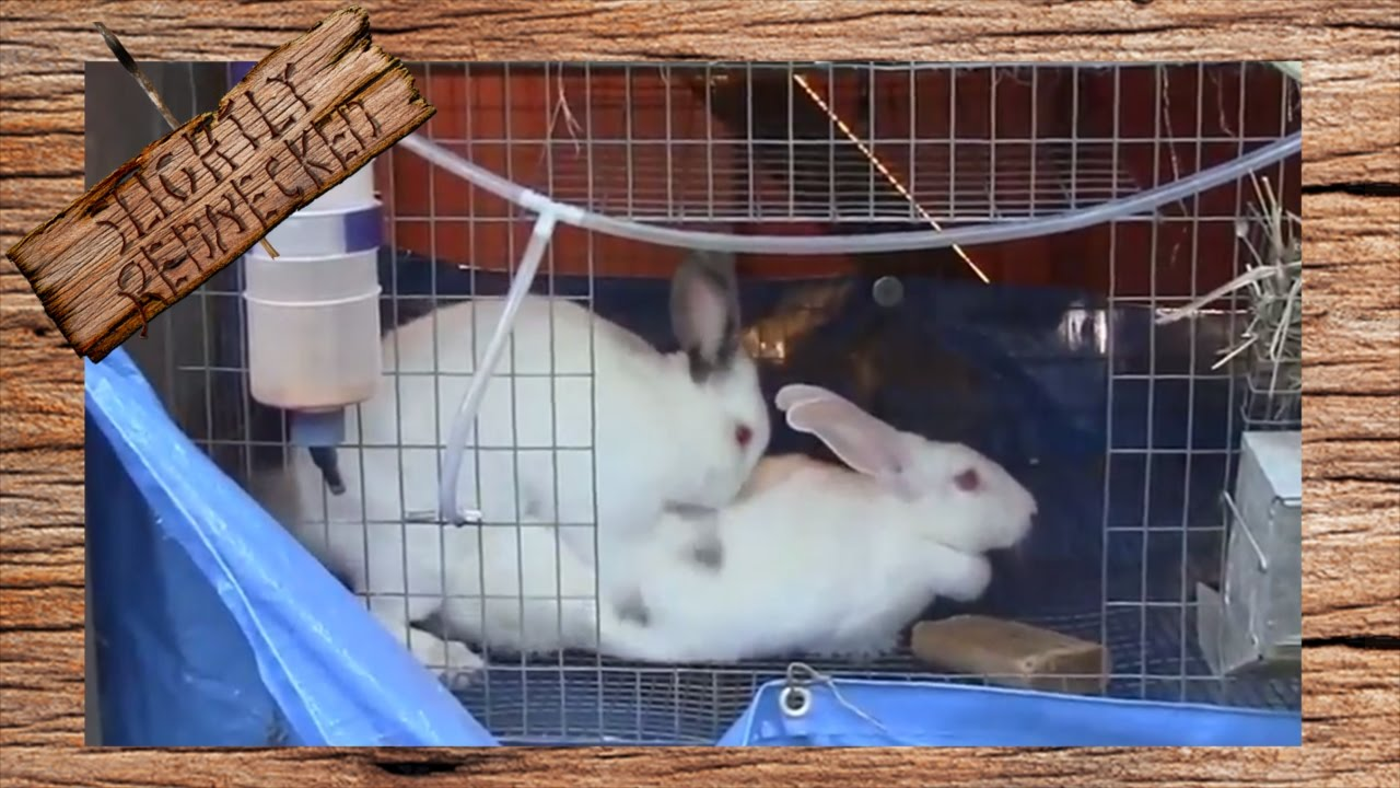 Breeding rabbits: a selection of sites
