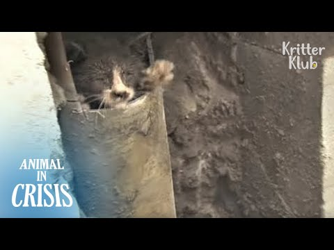 Kitten Reaches Out His Hand For People, Hoping They'd Save Him   Animal in Crisis EP119