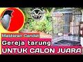 Masteran Gereja Tarung Untuk Cendet Calon Juara   Mp3 - Mp4 Download