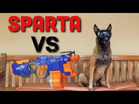 NERF GUN VS DOG! TEBAK GIMANA REAKSI SPARTA?! | SPARTA THE BELGIAN MALINOIS