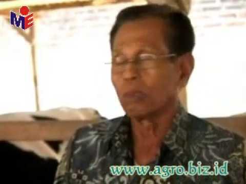 Integrated Farming Indonesia agro.biz.id