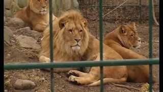 Dschungel in Grömitz - Zoo Arche Noah