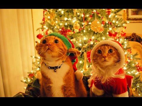 Искусственные елки - Новогодние украшения!из YouTube · С высокой четкостью · Длительность: 1 мин43 с  · Просмотров: 344 · отправлено: 03.11.2014 · кем отправлено: Ёлка искусственная