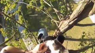 Biker saved two kittens ( GoPro Hero3 )
