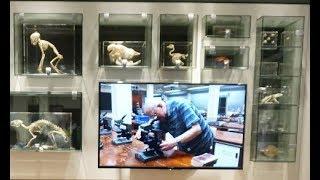 Publication Date: 2017-11-23 | Video Title: 聖類斯中學生物科展館 收藏鮑嘉天神父搜集標本/公教報2017