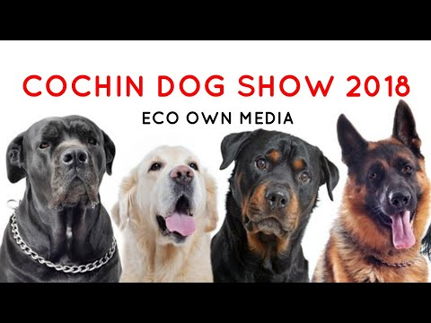 Dog show cochin [ ECO OWN MEDIA] The canine club of cochin