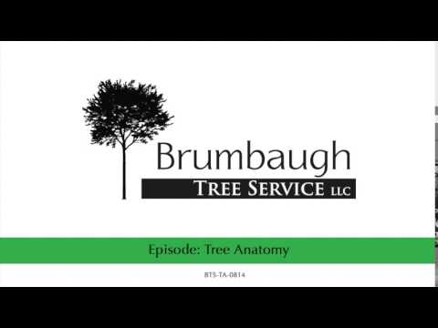 Tree Anatomy - YouTube