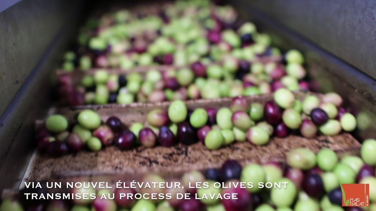Récolte des olives et production de l'huile - Moulin du Mas Palat