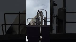 Smarty goat - 977138 thumbnail