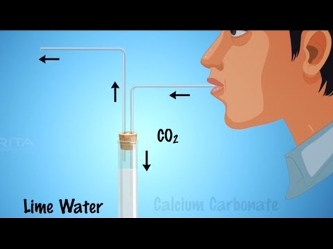 Role of Carbon dioxide During Respiration - MeitY OLabs