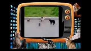 РЕАЛЬНЫЕ КОТЫ !!! Уличный БАТЛ!!! СУПЕР!!!