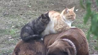ДОБРЫЙ ДЖО ! Дружба котов и собаки.