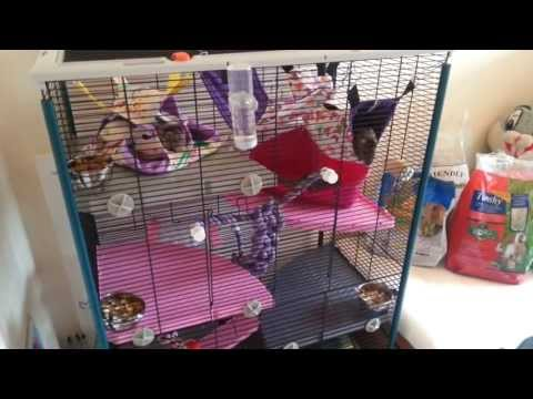 Guinea Pig, Rat Room Tour + Diet and Treats